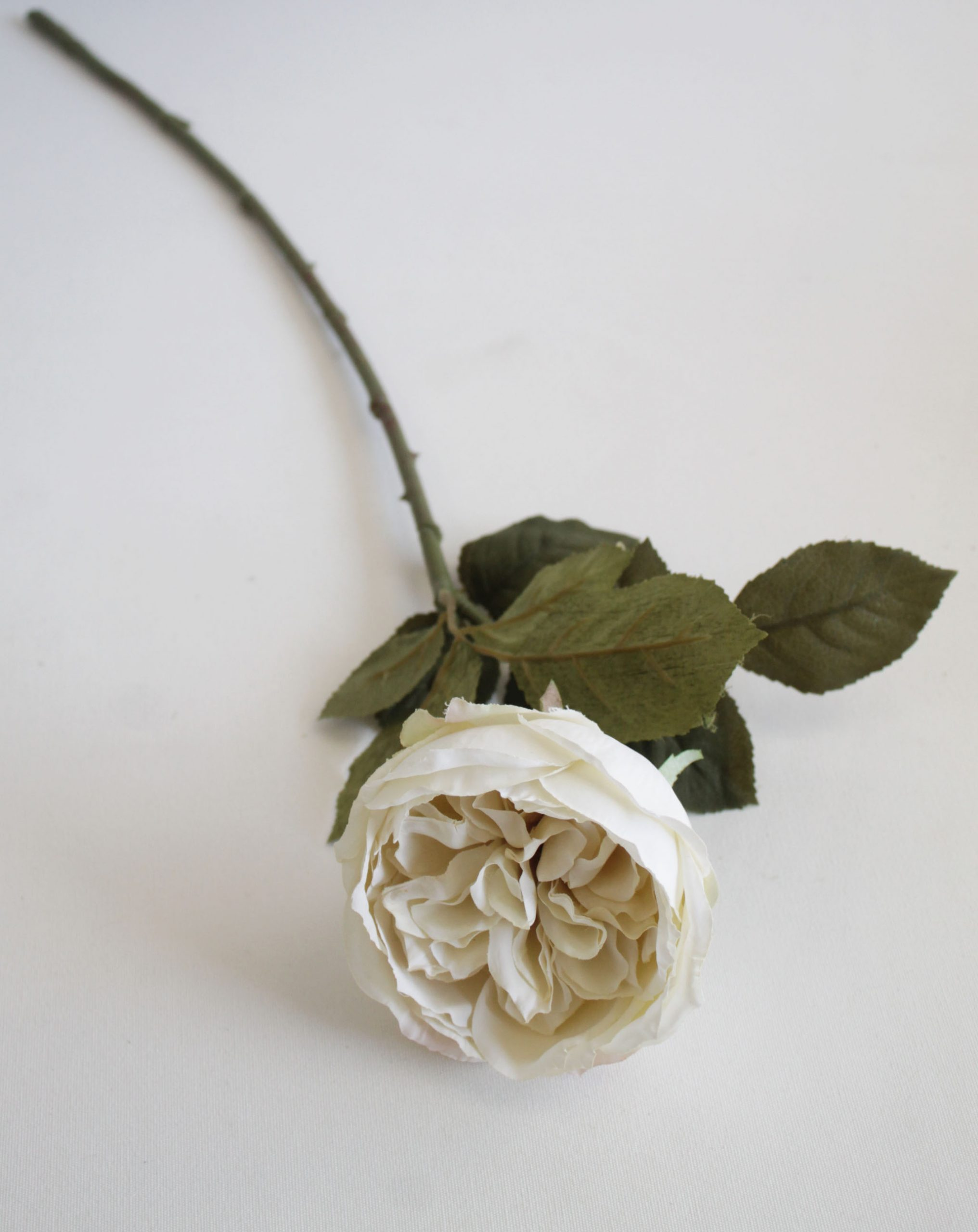 Creamy White Cabbage Rose